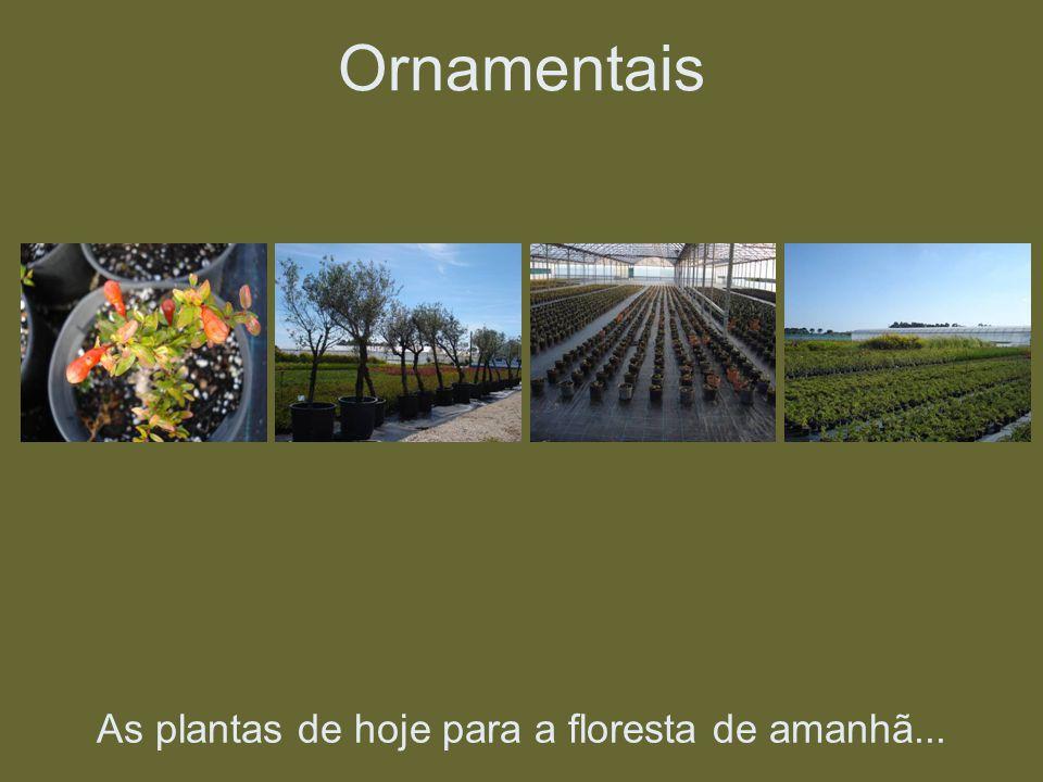 As plantas de hoje para a floresta de amanhã... Ornamentais