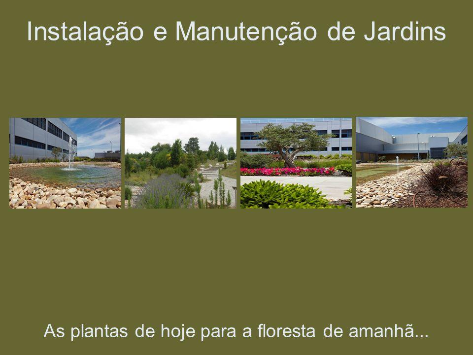 As plantas de hoje para a floresta de amanhã... Instalação e Manutenção de Jardins