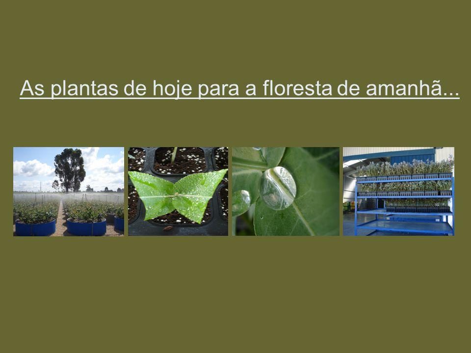 As plantas de hoje para a floresta de amanhã...