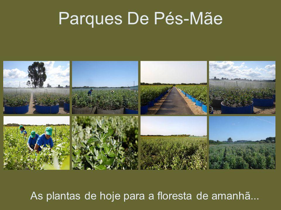 As plantas de hoje para a floresta de amanhã... Parques De Pés-Mãe