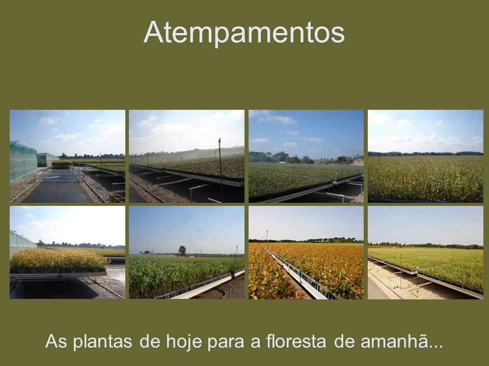 As plantas de hoje para a floresta de amanhã... Atempamentos