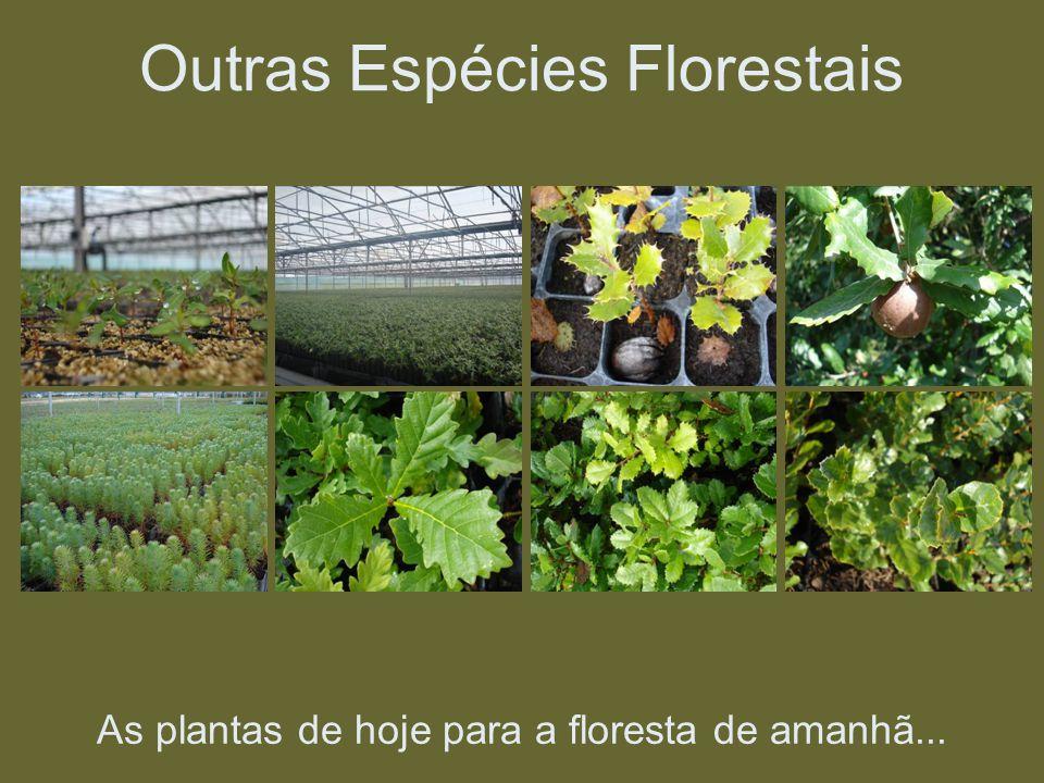 As plantas de hoje para a floresta de amanhã... Outras Espécies Florestais