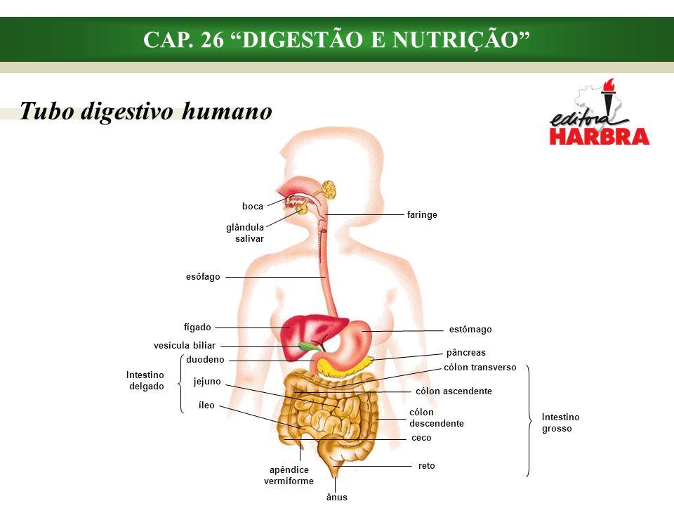 """Tubo digestivo humano CAP. 26 """"DIGESTÃO E NUTRIÇÃO"""" esôfago boca faringe glândula salivar fígado vesícula biliar duodeno jejuno íleo estômago pâncreas"""