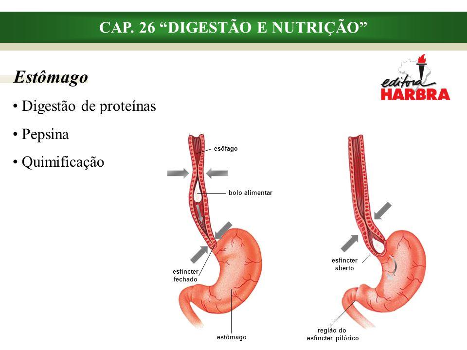"""Estômago CAP. 26 """"DIGESTÃO E NUTRIÇÃO"""" Digestão de proteínas Pepsina Quimificação esfíncter aberto região do esfíncter pilórico esôfago bolo alimentar"""
