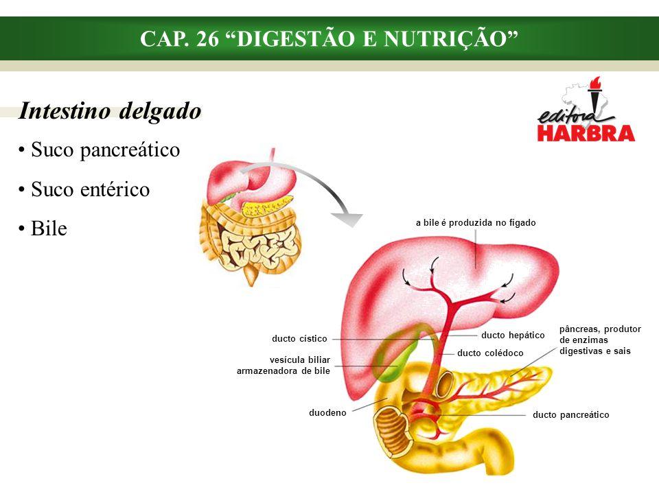 """Intestino delgado CAP. 26 """"DIGESTÃO E NUTRIÇÃO"""" Suco pancreático Suco entérico Bile a bile é produzida no fígado ducto cístico vesícula biliar armazen"""