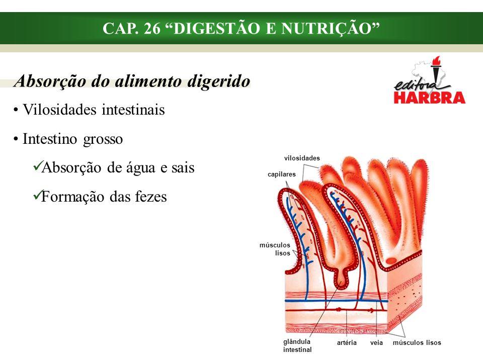 """Absorção do alimento digerido CAP. 26 """"DIGESTÃO E NUTRIÇÃO"""" Vilosidades intestinais Intestino grosso Absorção de água e sais Formação das fezes vilosi"""