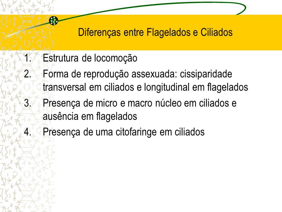 Diferenças entre Flagelados e Ciliados 1.Estrutura de locomoção 2.Forma de reprodução assexuada: cissiparidade transversal em ciliados e longitudinal