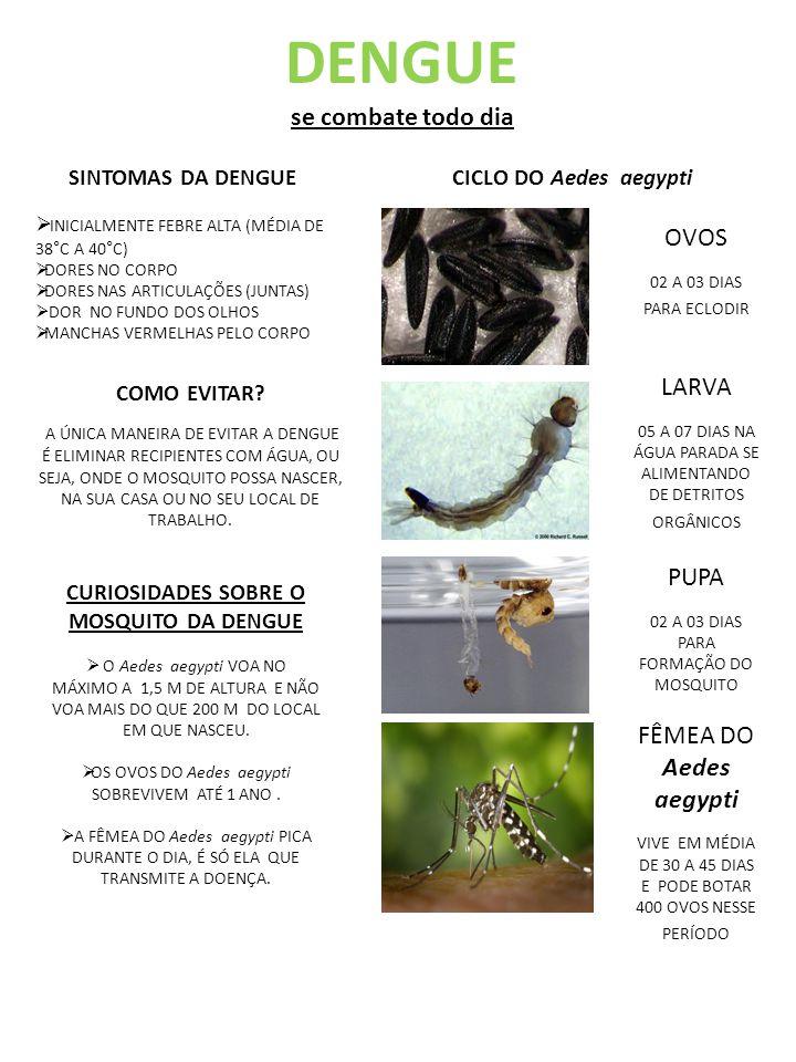 CICLO DO Aedes aegypti OVOS 02 A 03 DIAS PARA ECLODIR LARVA 05 A 07 DIAS NA ÁGUA PARADA SE ALIMENTANDO DE DETRITOS ORGÂNICOS PUPA 02 A 03 DIAS PARA FORMAÇÃO DO MOSQUITO FÊMEA DO Aedes aegypti VIVE EM MÉDIA DE 30 A 45 DIAS E PODE BOTAR 400 OVOS NESSE PERÍODO CURIOSIDADES SOBRE O MOSQUITO DA DENGUE  O Aedes aegypti VOA NO MÁXIMO A 1,5 M DE ALTURA E NÃO VOA MAIS DO QUE 200 M DO LOCAL EM QUE NASCEU.
