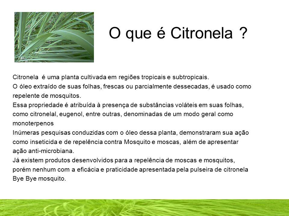 ESPANTANDO NATURALMENTE OS MOSQUITOS A Pulseira Bye Bye Mosquito contém Citronela Natural