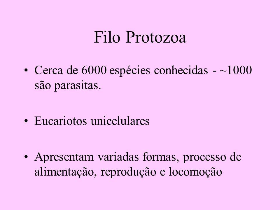 Filo Protozoa Cerca de 6000 espécies conhecidas - ~1000 são parasitas. Eucariotos unicelulares Apresentam variadas formas, processo de alimentação, re