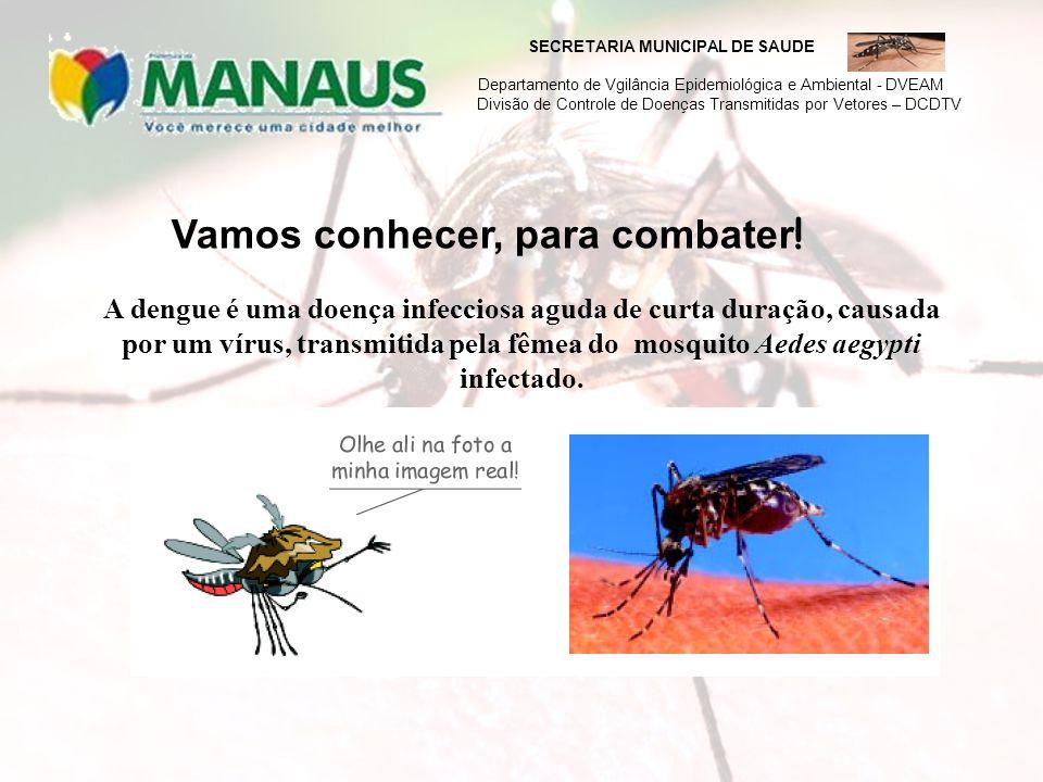 SECRETARIA MUNICIPAL DE SAUDE Departamento de Vgilância Epidemiológica e Ambiental - DVEAM Divisão de Controle de Doenças Transmitidas por Vetores – D