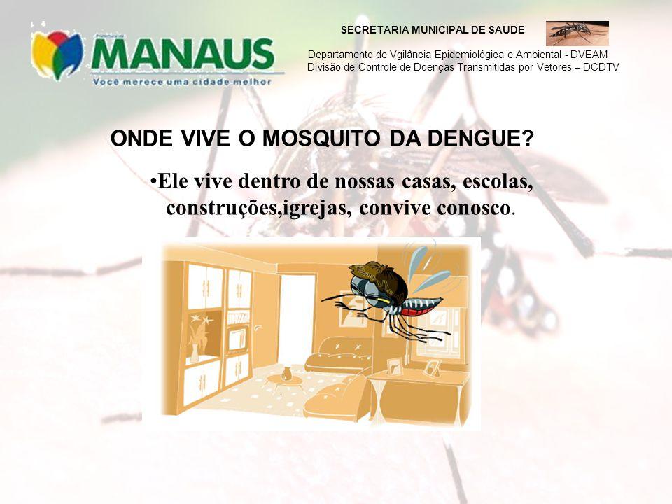 SECRETARIA MUNICIPAL DE SAUDE Departamento de Vgilância Epidemiológica e Ambiental - DVEAM Divisão de Controle de Doenças Transmitidas por Vetores – DCDTV A fêmea do mosquito da dengue coloca seus ovos nas vasilhas com água parada e lá os mosquitos se desenvolvem.