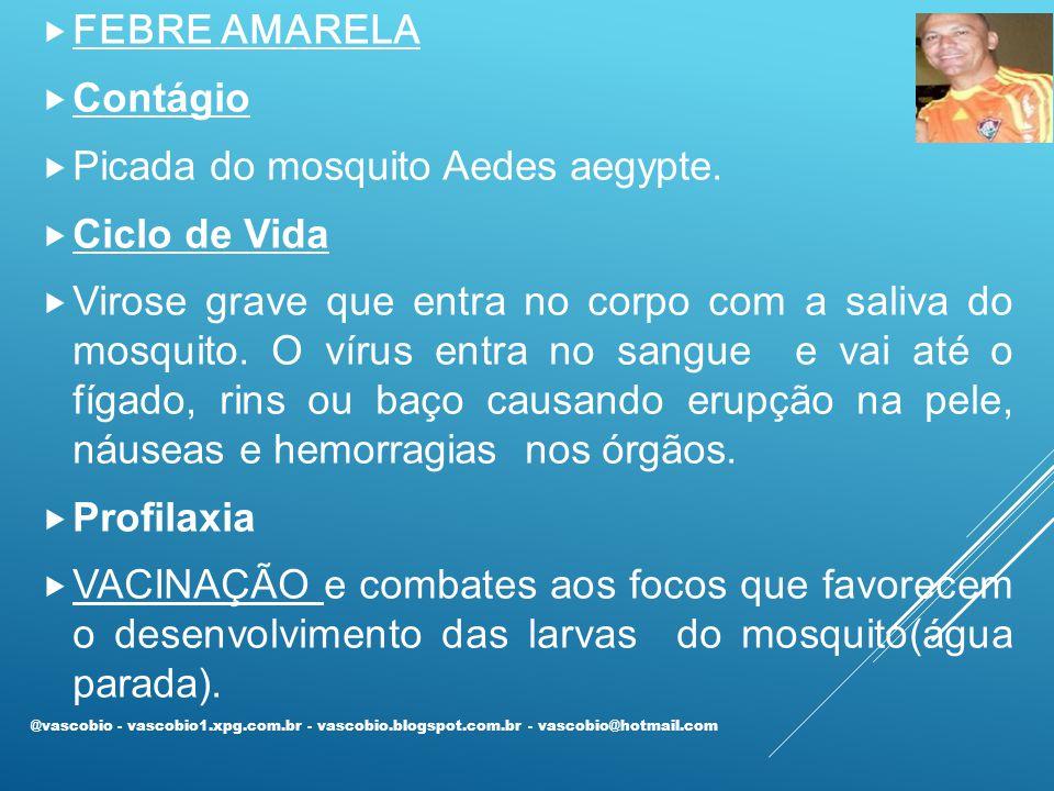  FEBRE AMARELA  Contágio  Picada do mosquito Aedes aegypte.