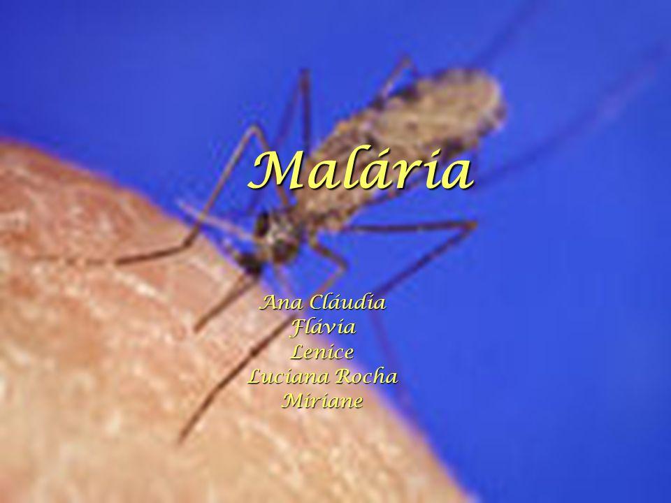 Malária Ana Cláudia FláviaLenice Luciana Rocha Miriane