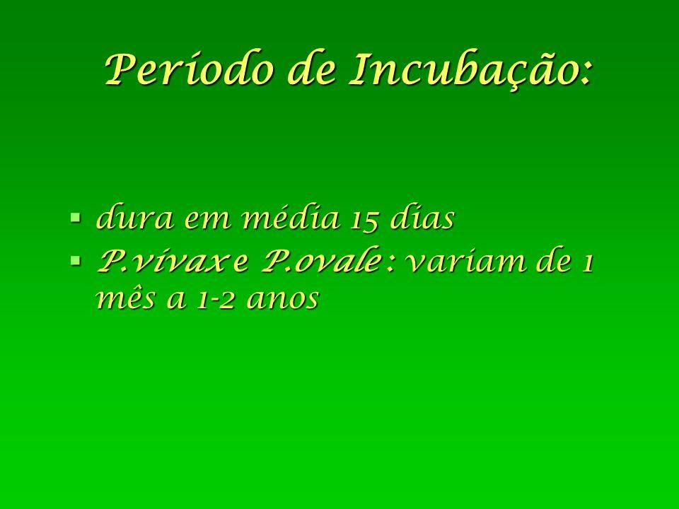 Período de Incubação:  dura em média 15 dias  P.vivax e P.ovale : variam de 1 mês a 1-2 anos