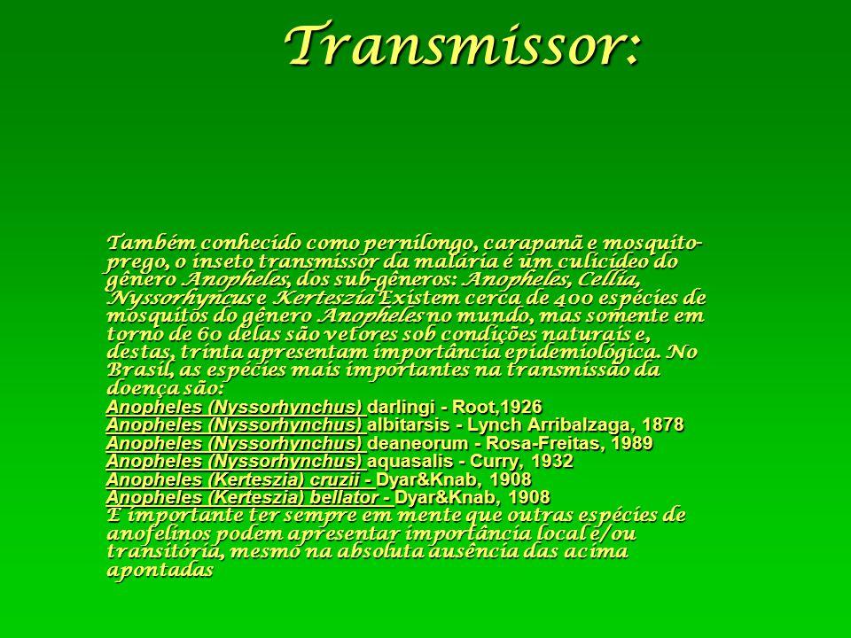 Transmissor: Também conhecido como pernilongo, carapanã e mosquito- prego, o inseto transmissor da malária é um culicídeo do gênero Anopheles, dos sub