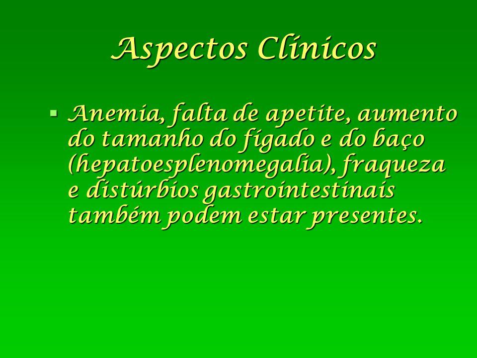 Aspectos Clínicos  Anemia, falta de apetite, aumento do tamanho do fígado e do baço (hepatoesplenomegalia), fraqueza e distúrbios gastrointestinais t
