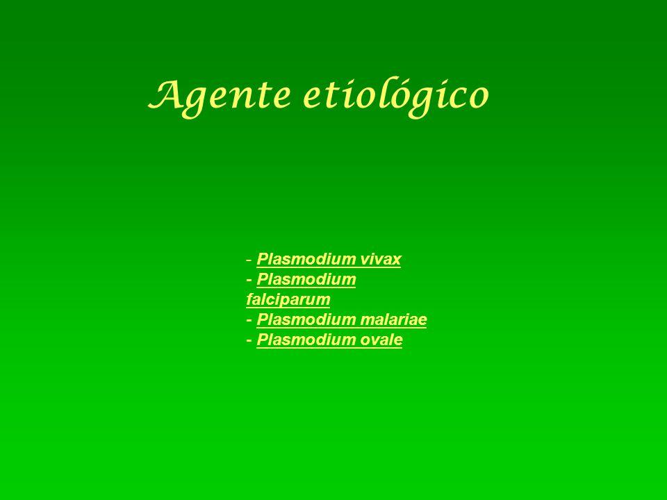 Agente etiológico - Plasmodium vivax - Plasmodium falciparum - Plasmodium malariae - Plasmodium ovale