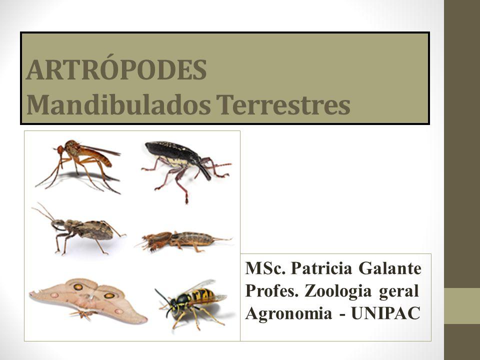 ARTRÓPODES Mandibulados Terrestres MSc. Patricia Galante Profes. Zoologia geral Agronomia - UNIPAC