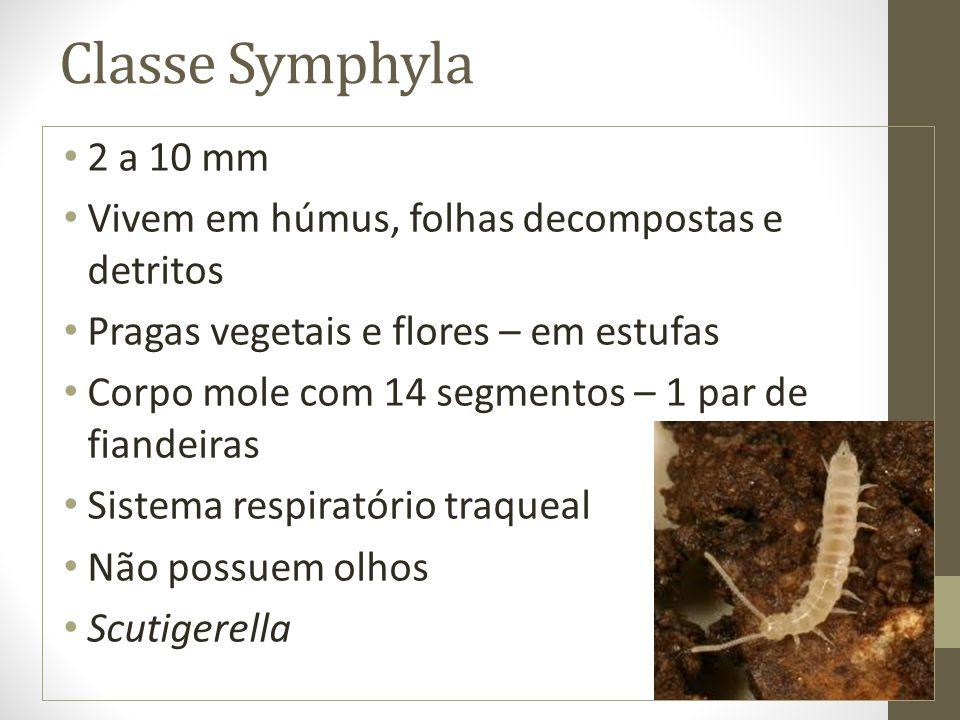 Classe Symphyla 2 a 10 mm Vivem em húmus, folhas decompostas e detritos Pragas vegetais e flores – em estufas Corpo mole com 14 segmentos – 1 par de f