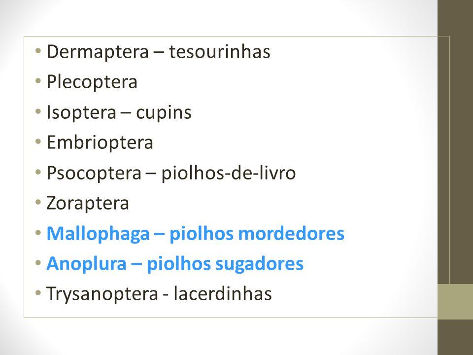 Dermaptera – tesourinhas Plecoptera Isoptera – cupins Embrioptera Psocoptera – piolhos-de-livro Zoraptera Mallophaga – piolhos mordedores Anoplura – p