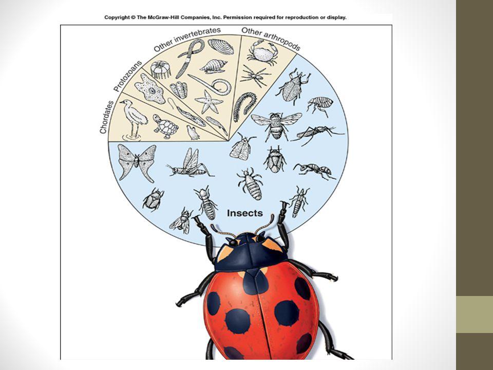 CLASSES Classe Chilopoda Classe Diplopoda Classe Insecta