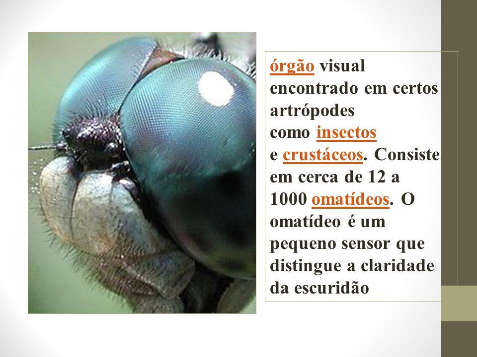 órgãoórgão visual encontrado em certos artrópodes como insectos e crustáceos. Consiste em cerca de 12 a 1000 omatídeos. O omatídeo é um pequeno sensor