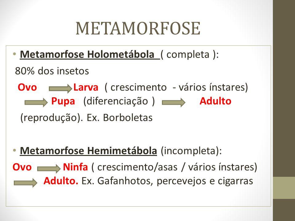 METAMORFOSE Metamorfose Holometábola ( completa ): 80% dos insetos Ovo Larva ( crescimento - vários ínstares) Pupa (diferenciação ) Adulto (reprodução