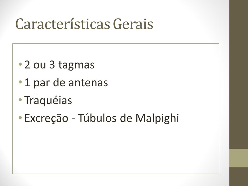 Características Gerais 2 ou 3 tagmas 1 par de antenas Traquéias Excreção - Túbulos de Malpighi