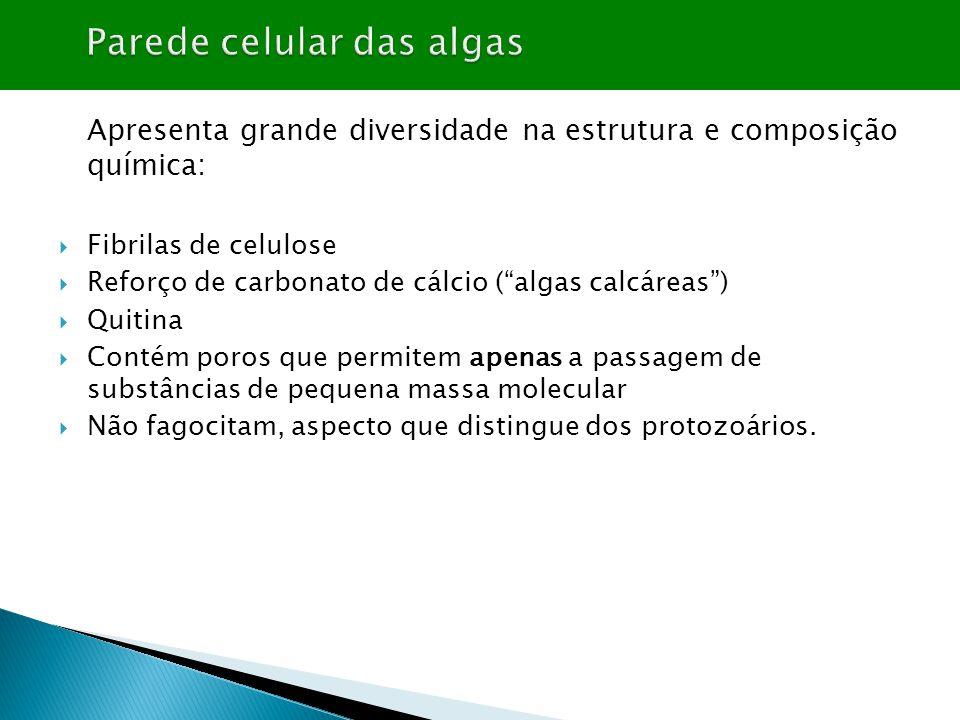 """Apresenta grande diversidade na estrutura e composição química:  Fibrilas de celulose  Reforço de carbonato de cálcio (""""algas calcáreas"""")  Quitina"""