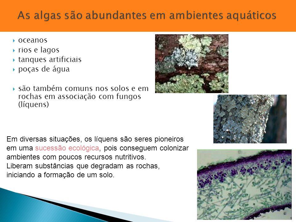  oceanos  rios e lagos  tanques artificiais  poças de água  são também comuns nos solos e em rochas em associação com fungos (líquens) Em diversa