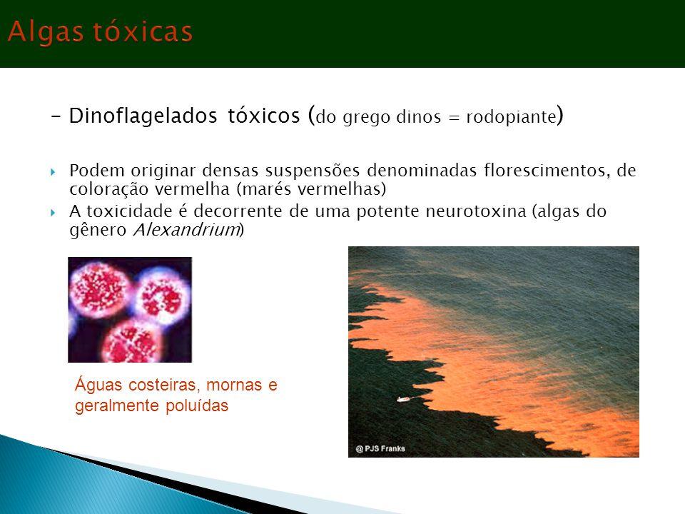 - Dinoflagelados tóxicos ( do grego dinos = rodopiante )  Podem originar densas suspensões denominadas florescimentos, de coloração vermelha (marés v
