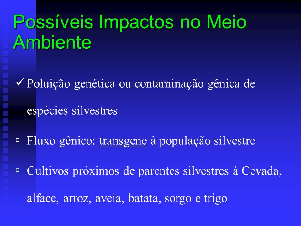 Possíveis Impactos no Meio Ambiente Poluição genética ou contaminação gênica de espécies silvestres  Fluxo gênico: transgene à população silvestre 