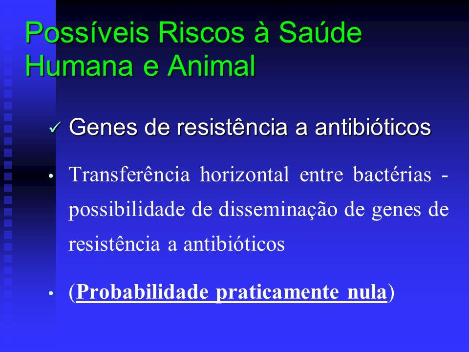 Possíveis Riscos à Saúde Humana e Animal Genes de resistência a antibióticos Genes de resistência a antibióticos Transferência horizontal entre bactérias - possibilidade de disseminação de genes de resistência a antibióticos (Probabilidade praticamente nula)