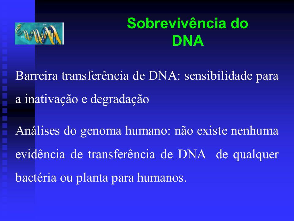 Sobrevivência do DNA Barreira transferência de DNA: sensibilidade para a inativação e degradação Análises do genoma humano: não existe nenhuma evidência de transferência de DNA de qualquer bactéria ou planta para humanos.