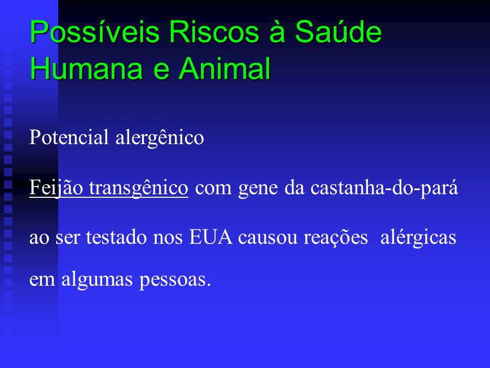 Possíveis Riscos à Saúde Humana e Animal Potencial alergênico Feijão transgênico com gene da castanha-do-pará ao ser testado nos EUA causou reações al