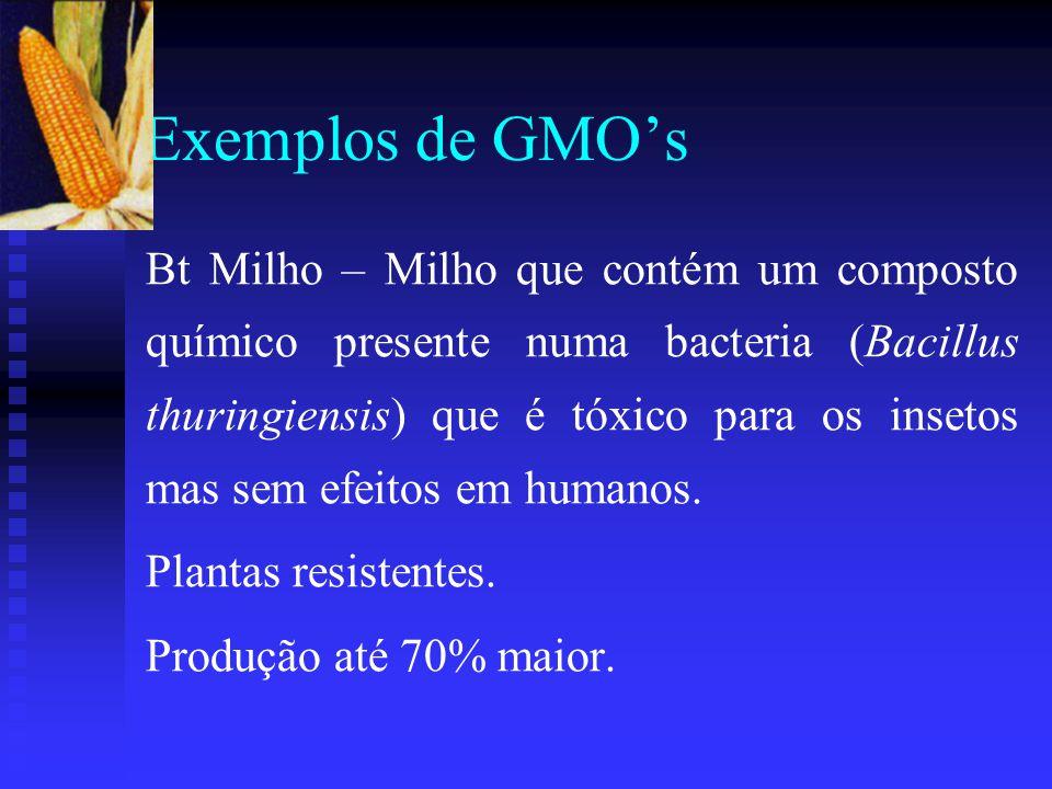 Exemplos de GMO's Bt Milho – Milho que contém um composto químico presente numa bacteria (Bacillus thuringiensis) que é tóxico para os insetos mas sem efeitos em humanos.