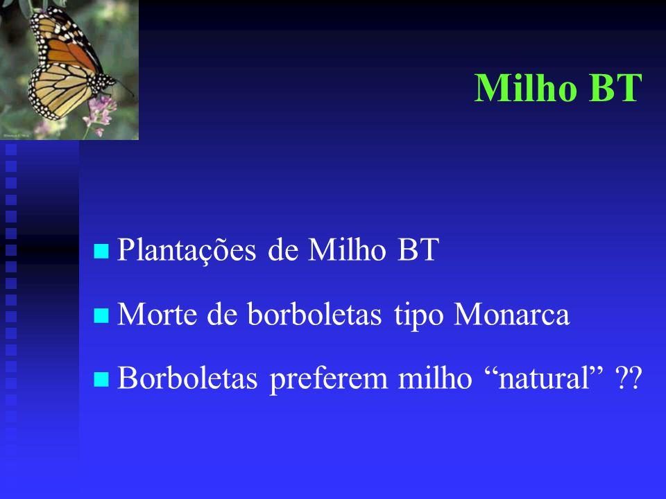 """Milho BT Plantações de Milho BT Morte de borboletas tipo Monarca Borboletas preferem milho """"natural"""" ??"""