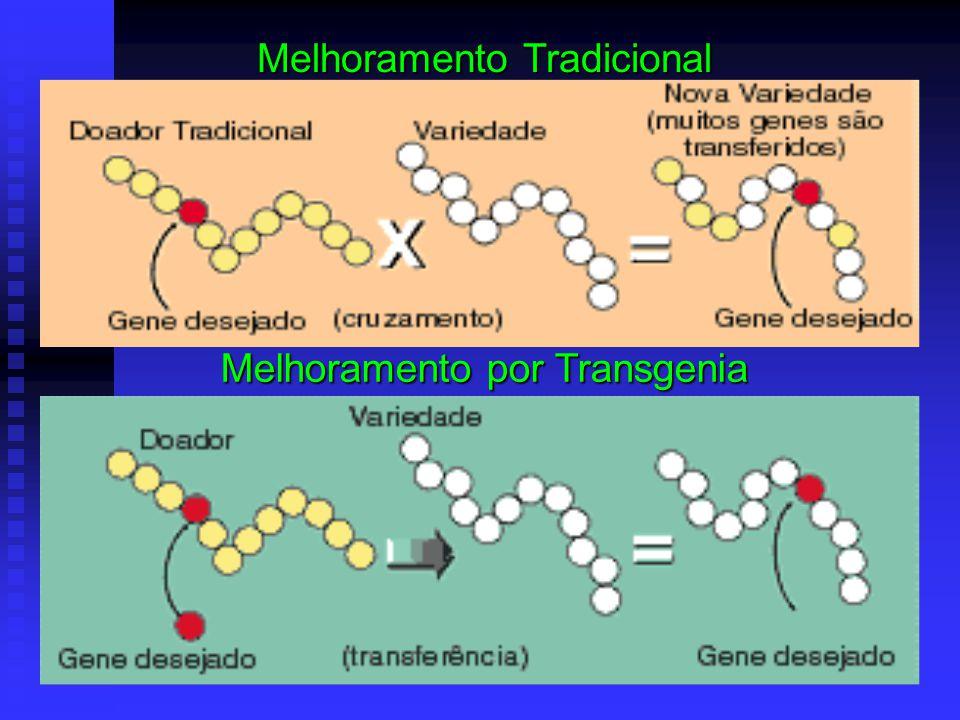 Melhoramento Tradicional Melhoramento por Transgenia