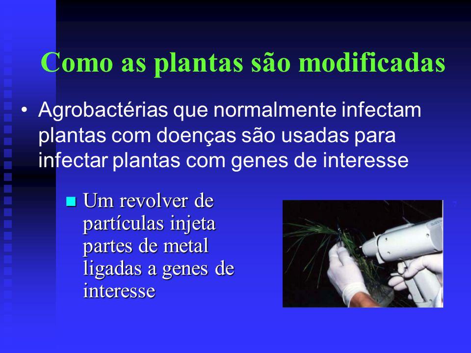 Como as plantas são modificadas Um revolver de partículas injeta partes de metal ligadas a genes de interesse Um revolver de partículas injeta partes