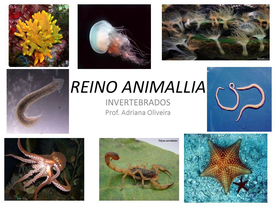 Filos pertencentes ao grupo dos Invertebrados: Filo Porifera Filo Cnidaria Filo Platyhelminthes Filo Nematoda Filo Annelida Filo Arthropoda Filo Mollusca Filo Echinodermata
