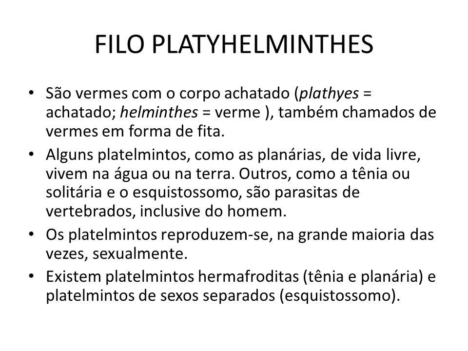 FILO PLATYHELMINTHES São vermes com o corpo achatado (plathyes = achatado; helminthes = verme ), também chamados de vermes em forma de fita. Alguns pl