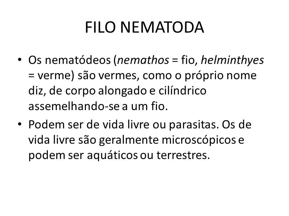 FILO NEMATODA Os nematódeos (nemathos = fio, helminthyes = verme) são vermes, como o próprio nome diz, de corpo alongado e cilíndrico assemelhando-se