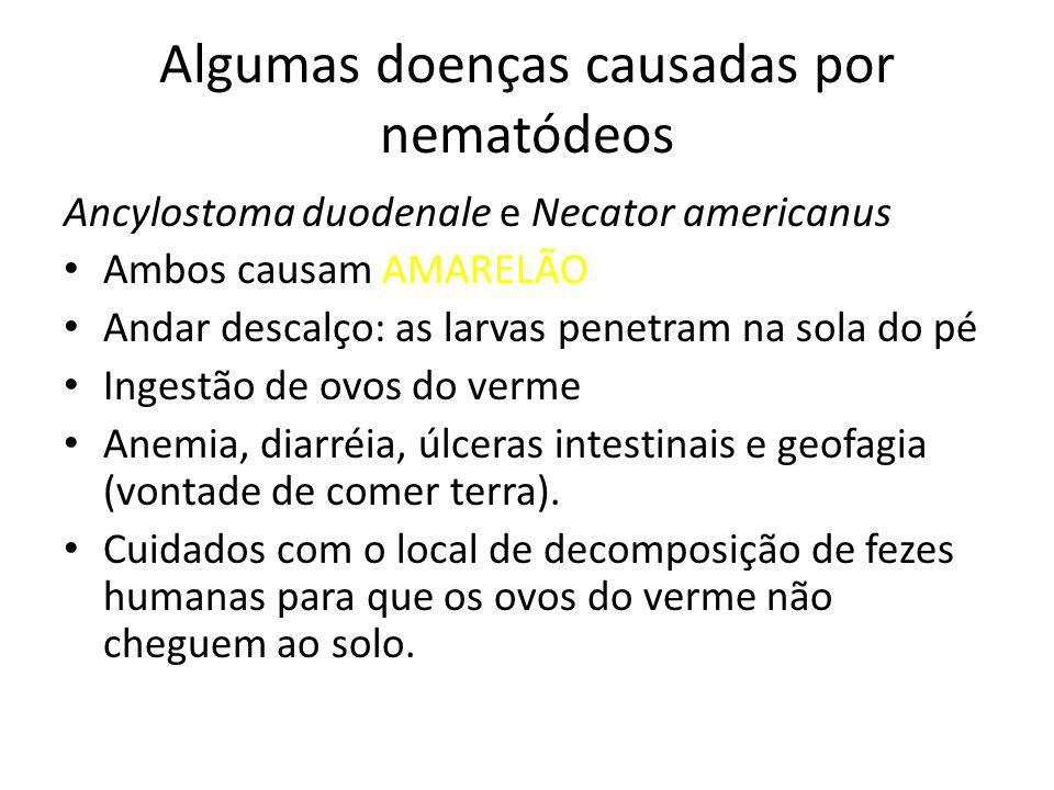 Algumas doenças causadas por nematódeos Ancylostoma duodenale e Necator americanus Ambos causam AMARELÃO Andar descalço: as larvas penetram na sola do