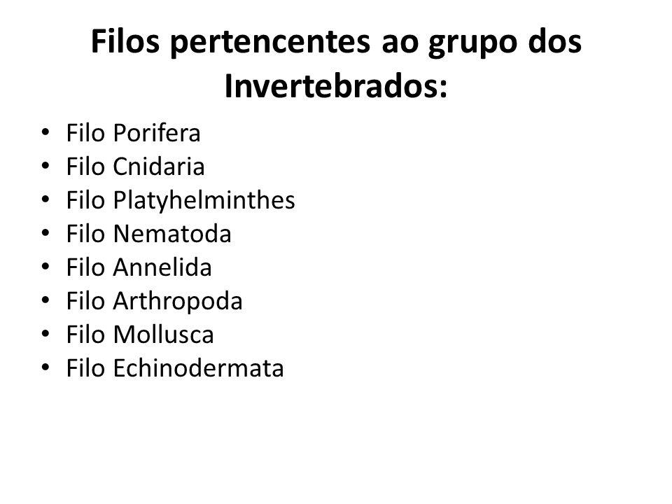 Filos pertencentes ao grupo dos Invertebrados: Filo Porifera Filo Cnidaria Filo Platyhelminthes Filo Nematoda Filo Annelida Filo Arthropoda Filo Mollu