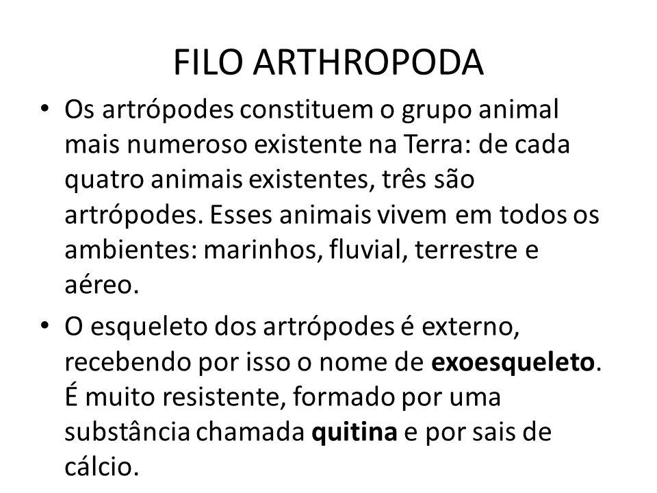 FILO ARTHROPODA Os artrópodes constituem o grupo animal mais numeroso existente na Terra: de cada quatro animais existentes, três são artrópodes. Esse