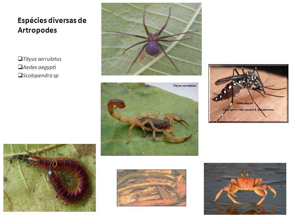 Espécies diversas de Artropodes  Tityus serrulatus  Aedes aegypti  Scolopendra sp