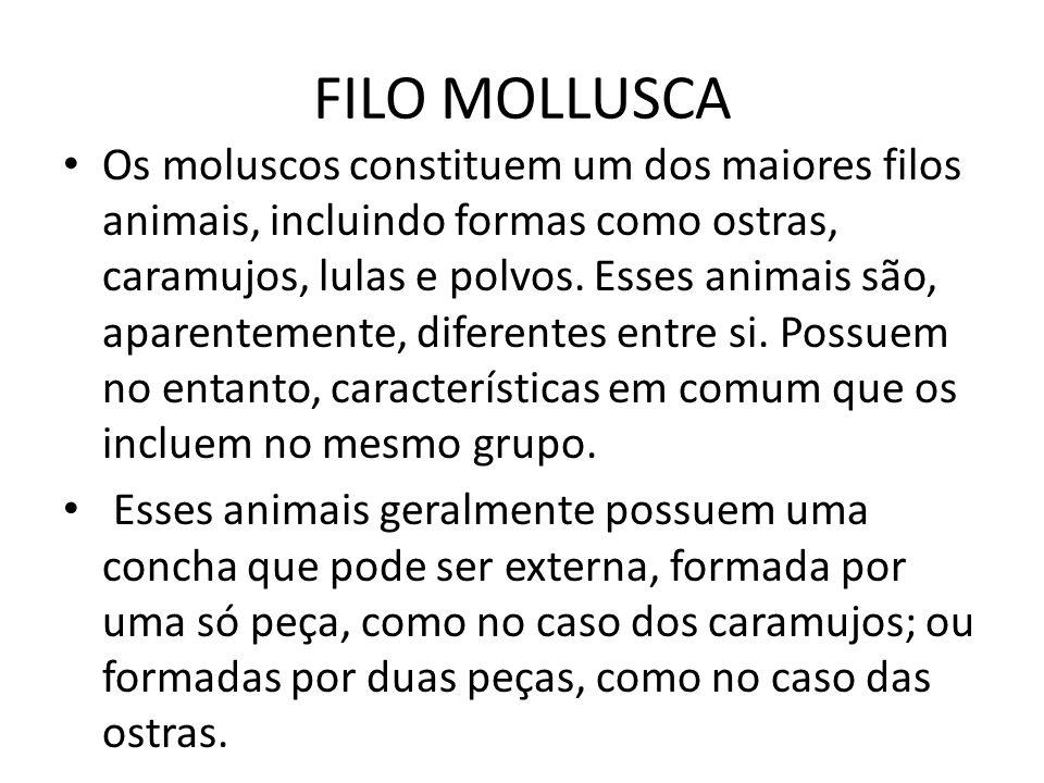 FILO MOLLUSCA Os moluscos constituem um dos maiores filos animais, incluindo formas como ostras, caramujos, lulas e polvos. Esses animais são, aparent