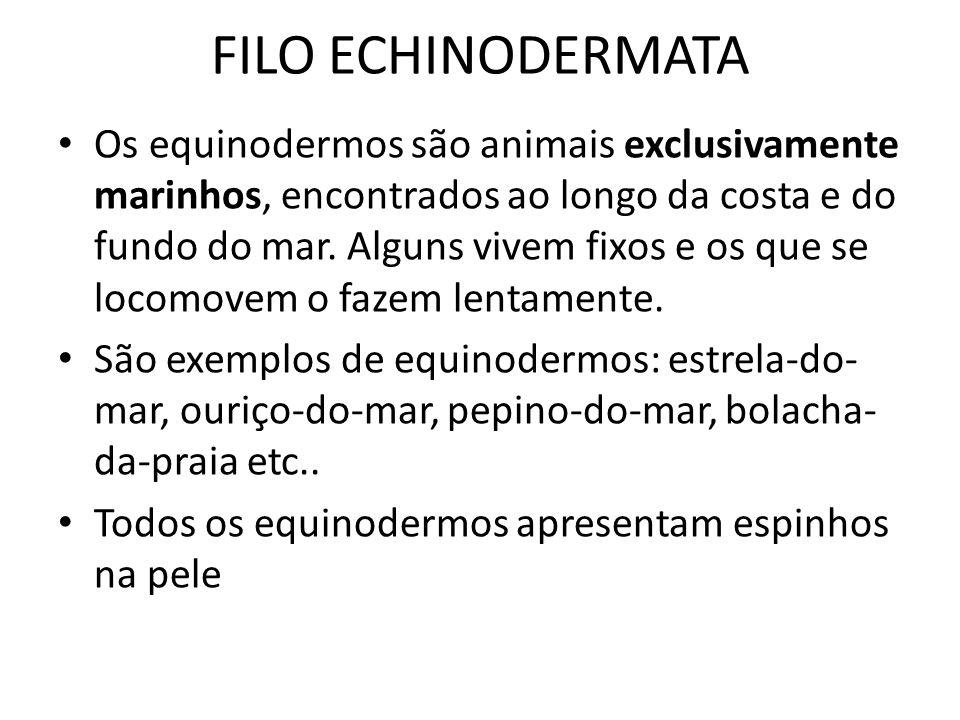 FILO ECHINODERMATA Os equinodermos são animais exclusivamente marinhos, encontrados ao longo da costa e do fundo do mar. Alguns vivem fixos e os que s