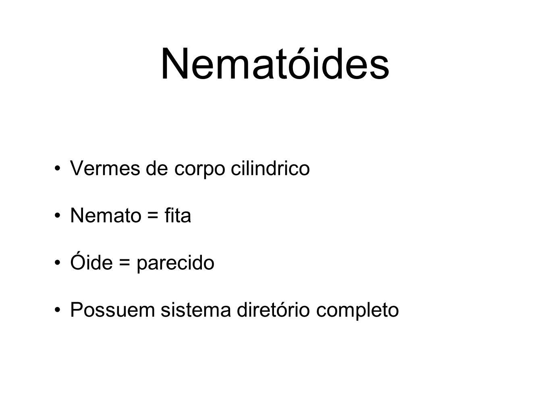 Nematóides Vermes de corpo cilindrico Nemato = fita Óide = parecido Possuem sistema diretório completo